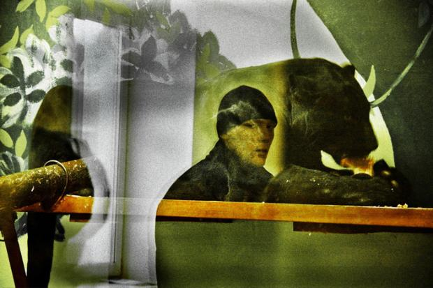 Zoo of Yekaterinburg (Russia). Reflections of visitors in the glasses, protecting open-air cages with animals. We can see that sees the glass dividing the world of people from fauna. Illusion is gradually created that people and animals are in one space where animals turn to people and people in animals. The people, who have planted animals in cages, appear in them.