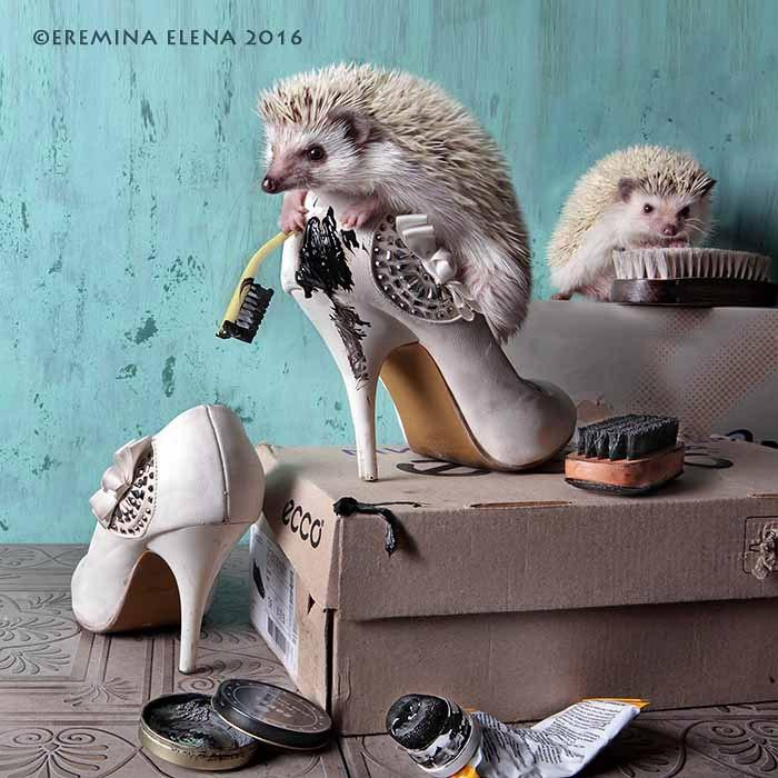 Фотографии из серии «Из жизни ёжиков». Фотограф Елена Еремина