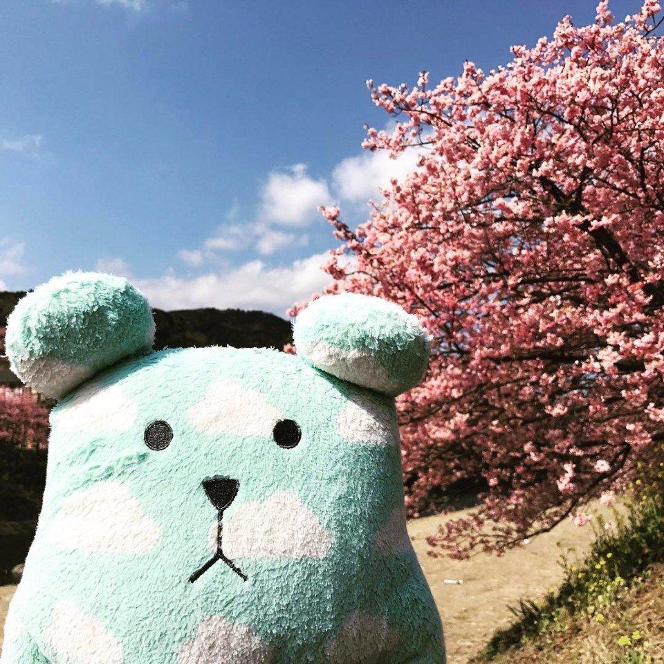 50 оттенков розового: в Японии на две недели раньше зацвела сакура