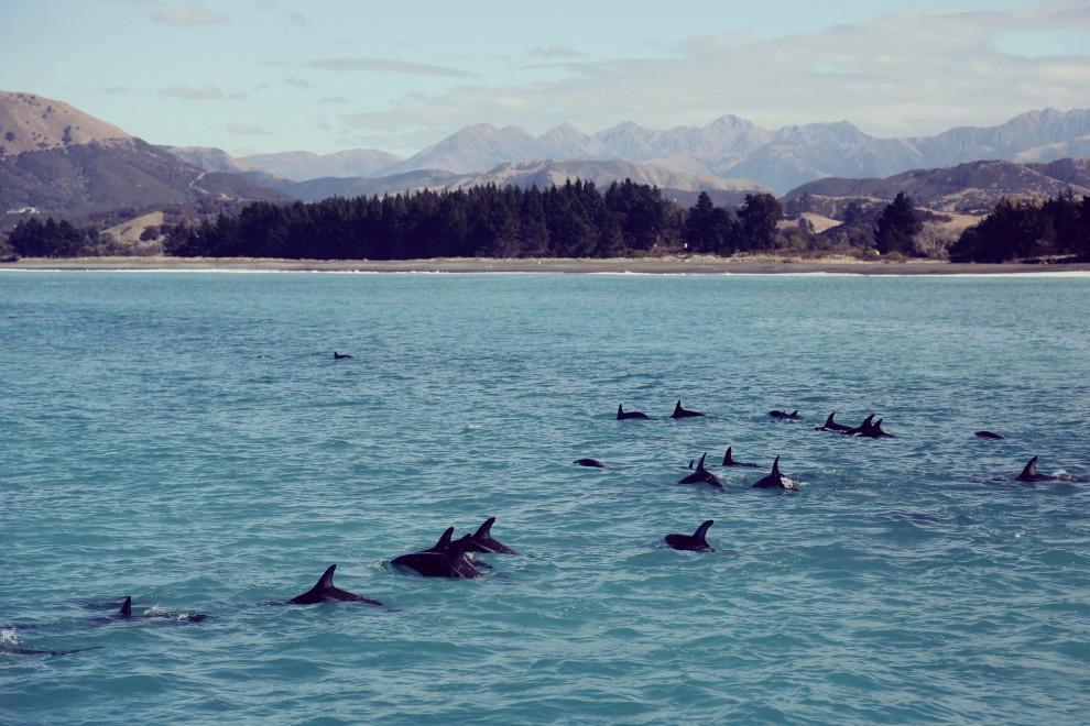 novaya-zelandiya-16-11-990x660