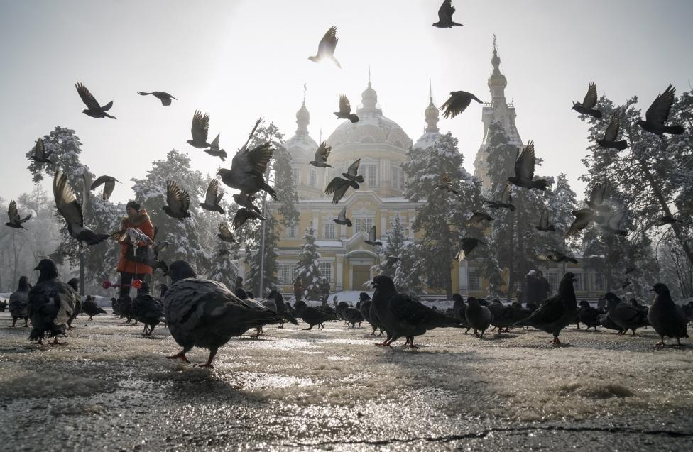A woman feeds pigeons in Almaty