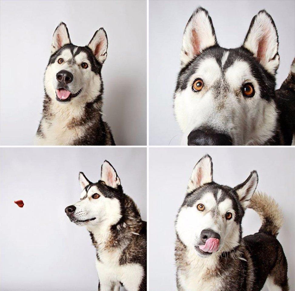 Xочу два! Фотографии — помощь бездомным животным штата Юта