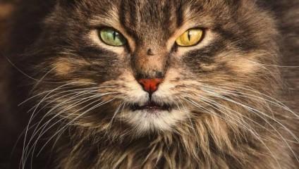 Бездомные кошки Вильнюса: иная красота