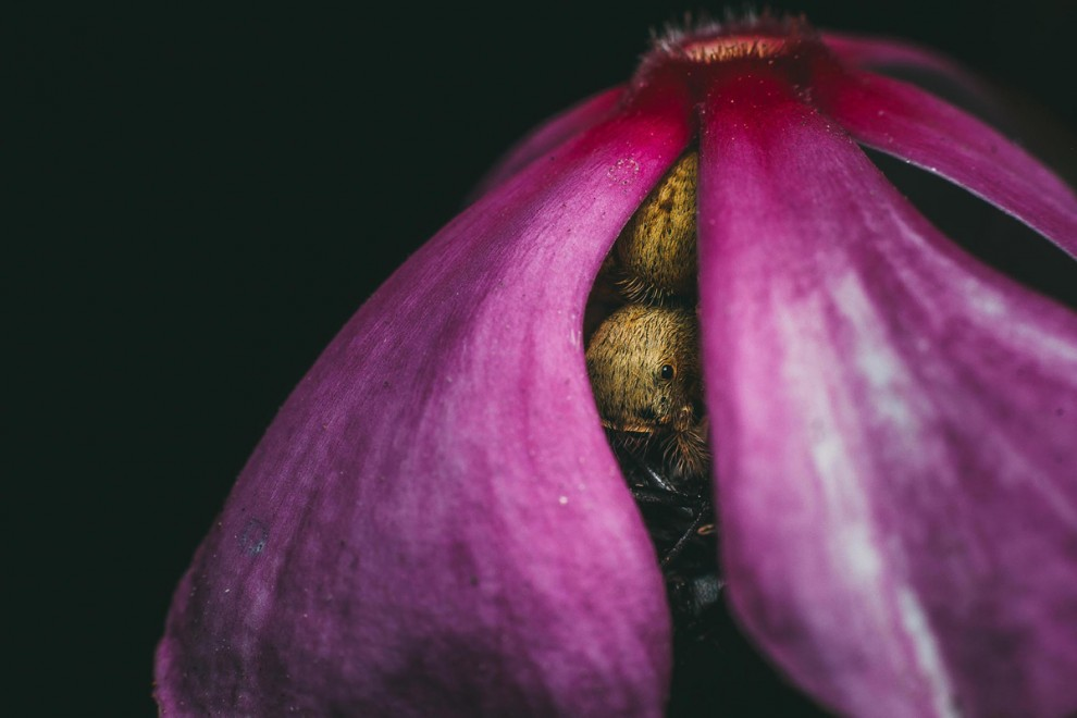fotokonkurs-Smithsonian-22-12-990x660