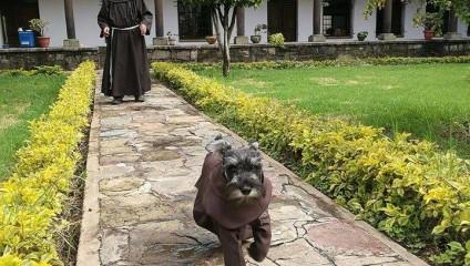 Новый член францисканского братства: пёс Кармело, которого приютил монастырь