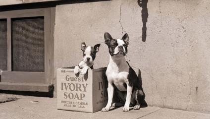 Национальный день щенка в США: праздник дружбы человека и собаки