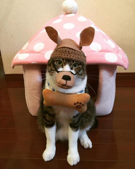 1 ноября в Японии отмечают День Собаки
