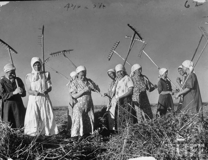 Украинские женщины убирают пшеницу в колхозе недалеко от Харькова.