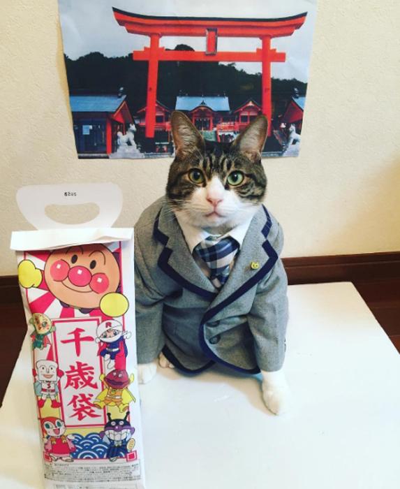 Шичи-го-сан, что означает *семь, пять и три*, - это ежегодный праздник здоровья и счастья девочек в возрасте 3 и 7 лет, и мальчиков 3 и 5 лет