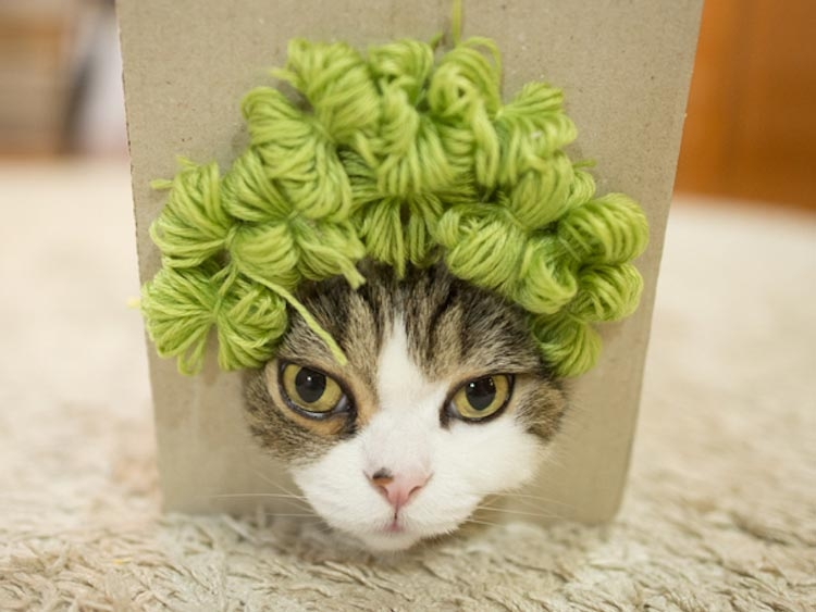 Котизм в коробке