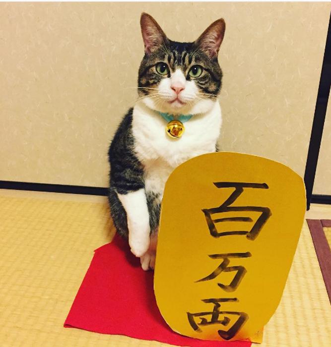 29 сентября в Японии отмечают день *Манящего кота*