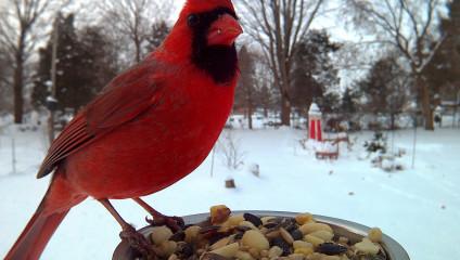 Потрясающие крупные планы птиц