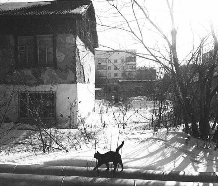 bezdomnye-koshki-22-19