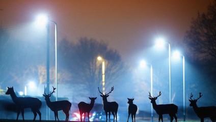 """Фотопроект """"Животные на улицах городе"""". Фотограф Mark Smith и Mark Bridger"""