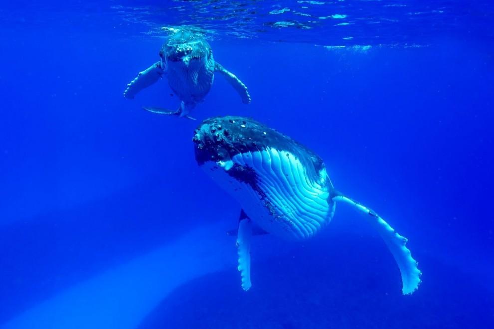 morskie-zhyvotnye-13-3-990x659