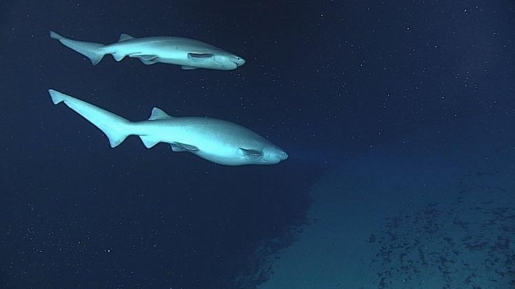morskie-zhyvotnye-17-11