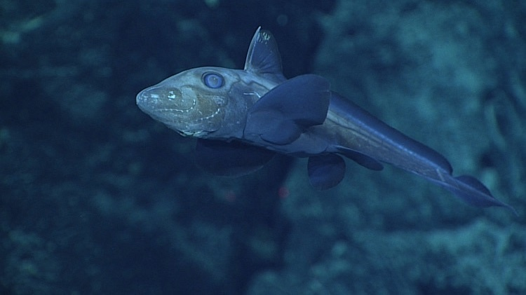 morskie-zhyvotnye-17-6