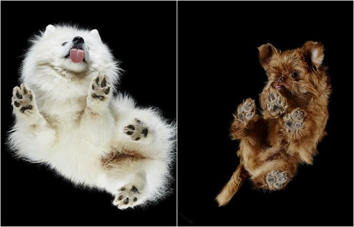 Фото собак с необычных ракурсов