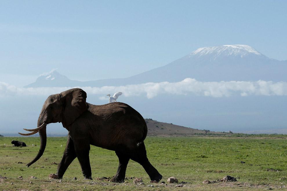 Национальный парк Амбосели в Кении