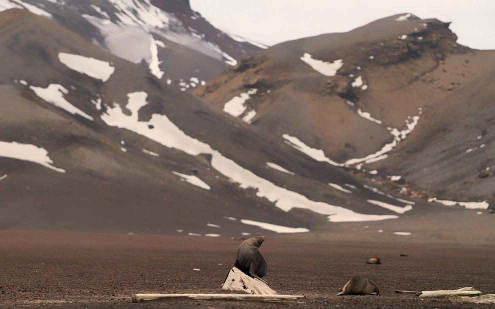 Antarctica-27-7-990x619