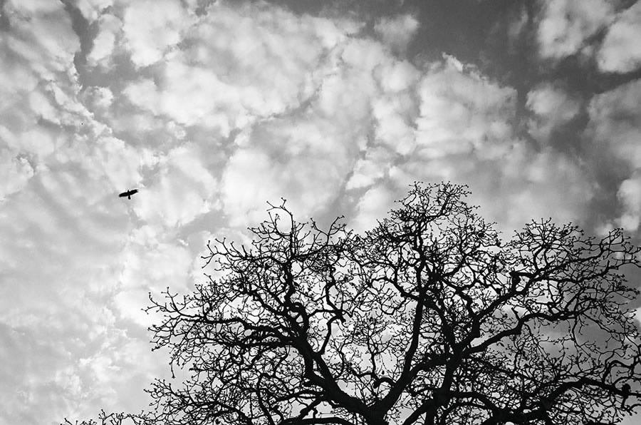 Fotograf-Kanishka-Mukerdzhi_20