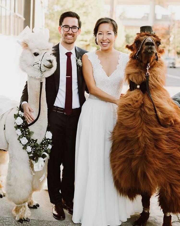 zhyvotnye-na-svadbe-16-1