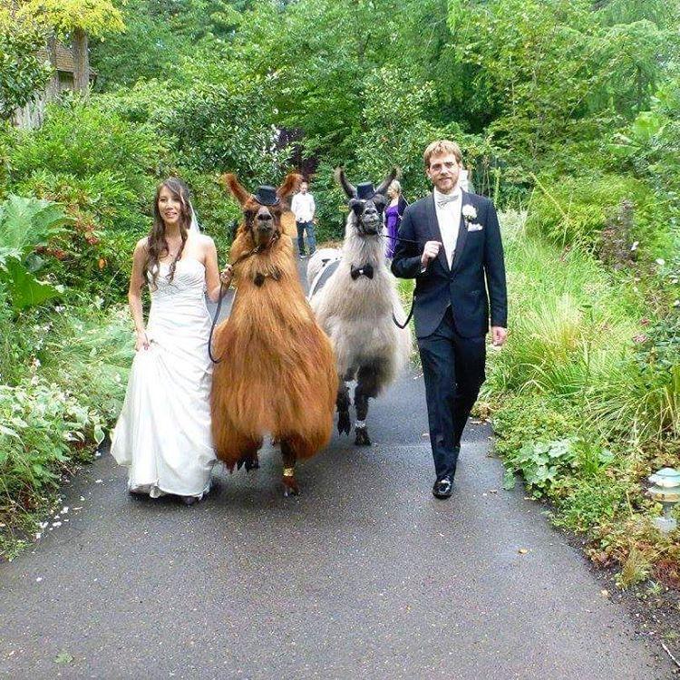zhyvotnye-na-svadbe-16-10