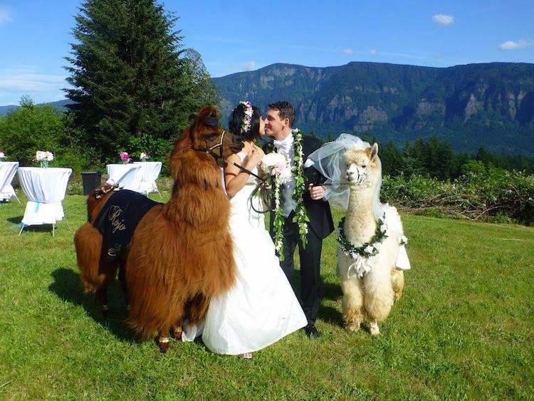 zhyvotnye-na-svadbe-16-11