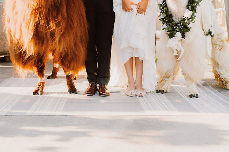 zhyvotnye-na-svadbe-16-8