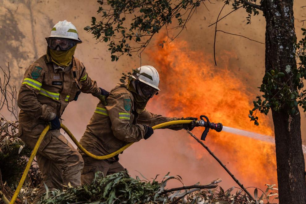 Аншлаги берегите лес от пожара картинки