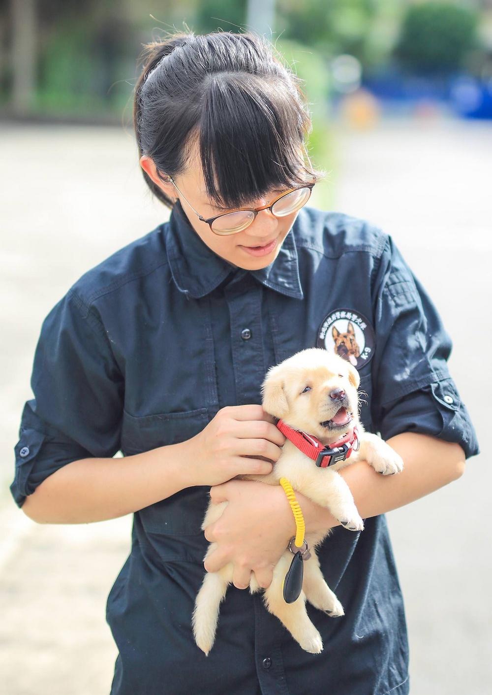 schenki-labradory-politsii-Tayvanya_2