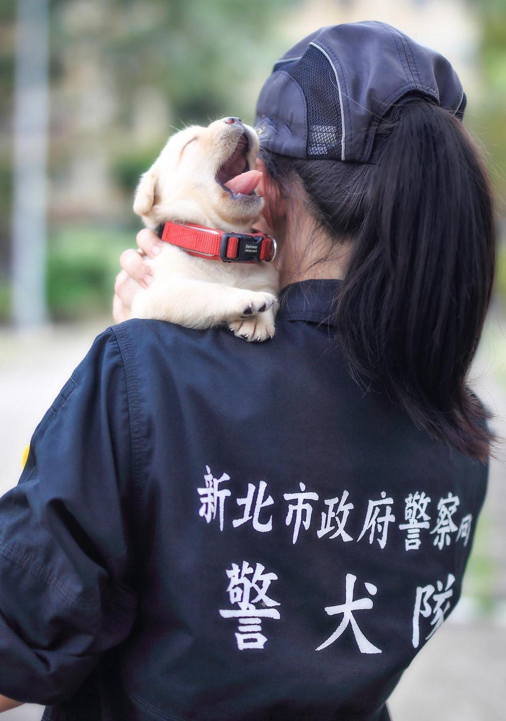 schenki-labradory-politsii-Tayvanya_3