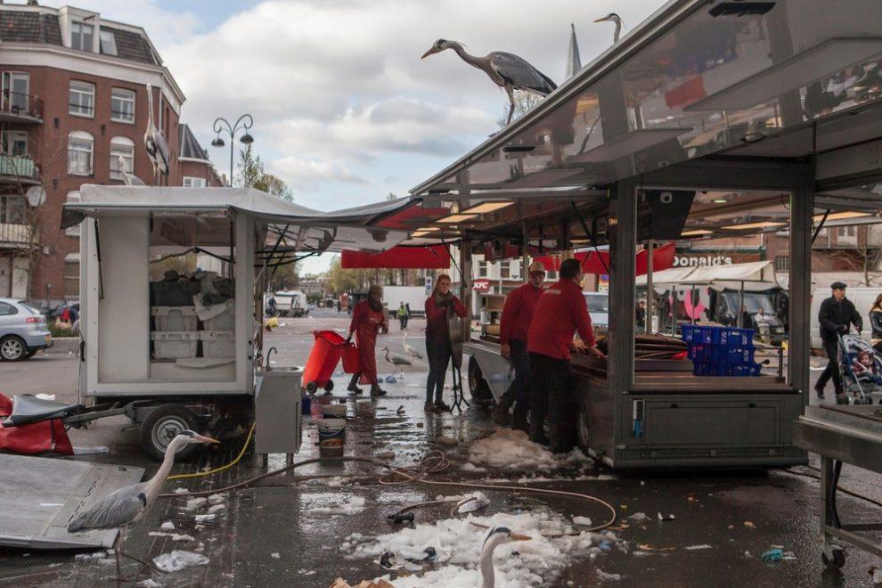 tsapli-v-Amsterdame_1
