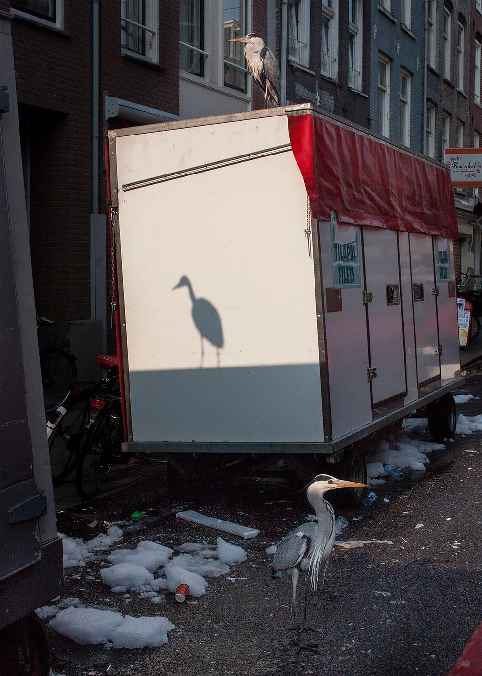 tsapli-v-Amsterdame_7