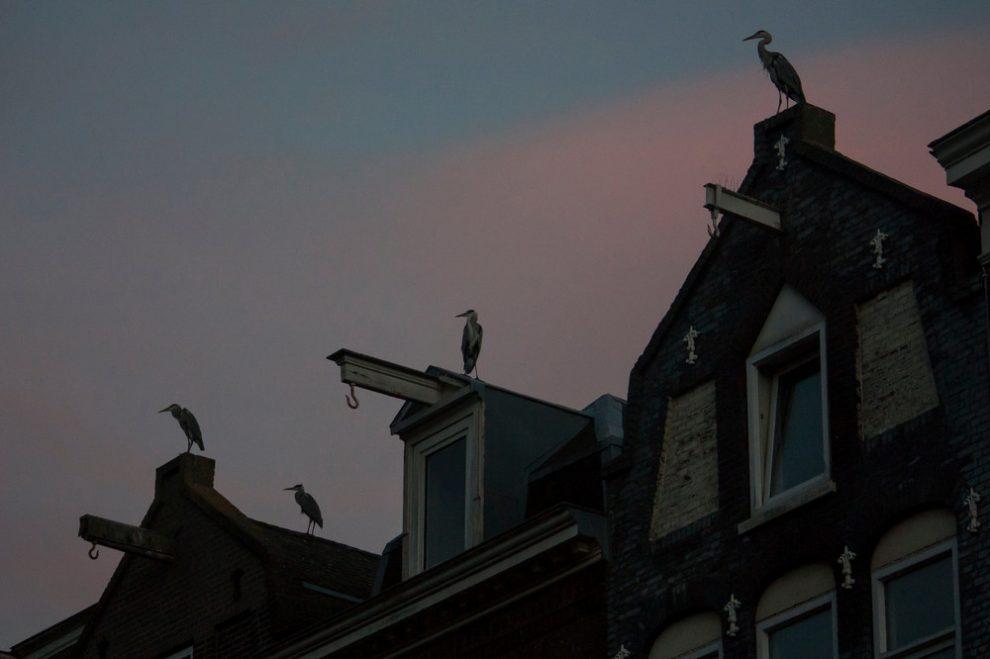 tsapli-v-Amsterdame_9