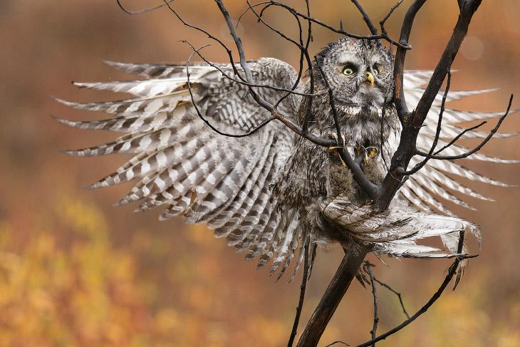 Птичий конкурс Audubon Photography Awards 2017