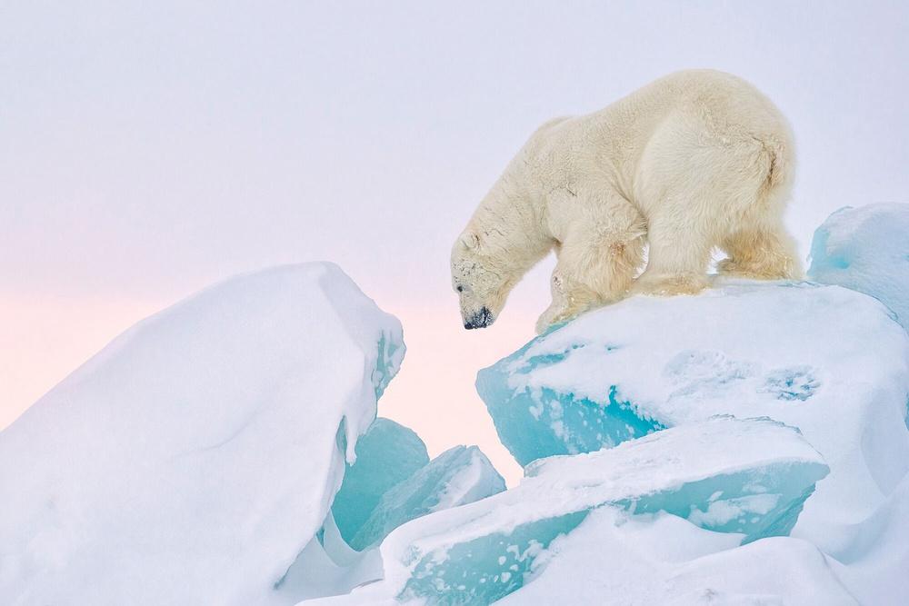 Prizraki-Arktiki_1