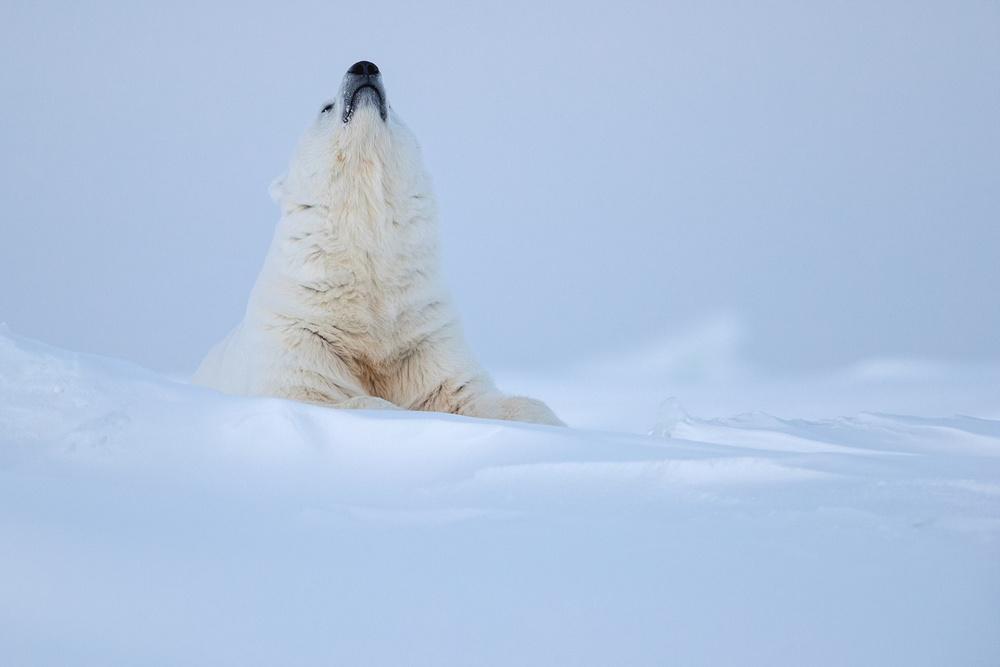 Prizraki-Arktiki_2