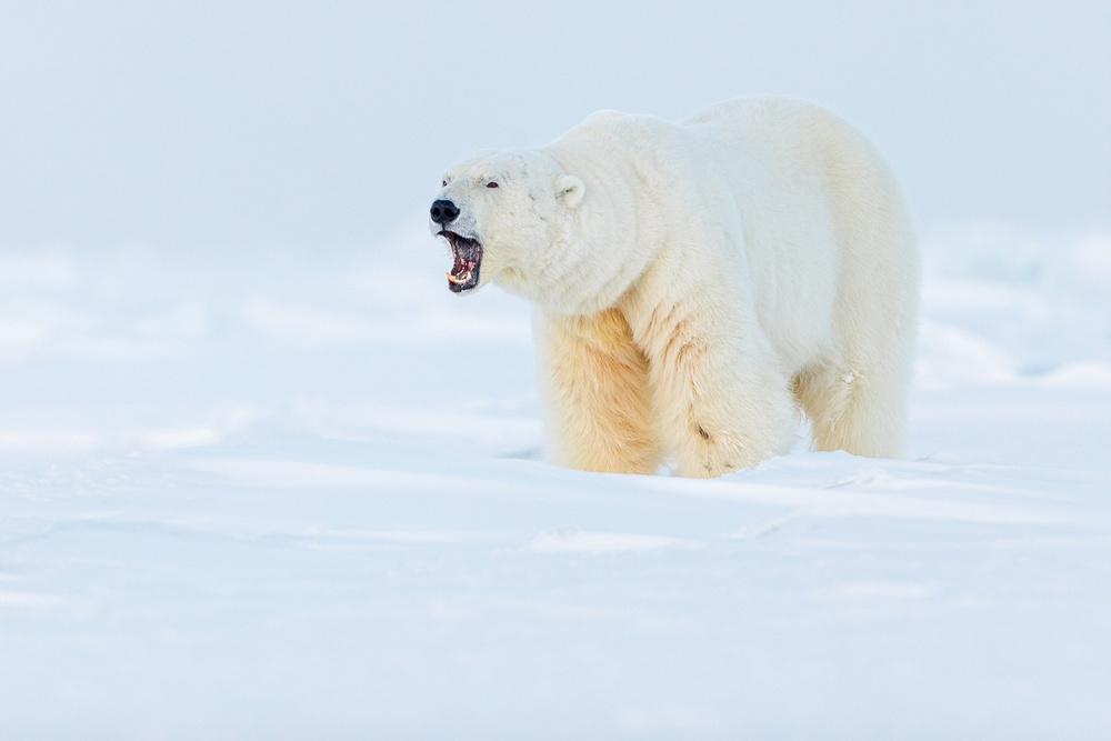 Prizraki-Arktiki_3