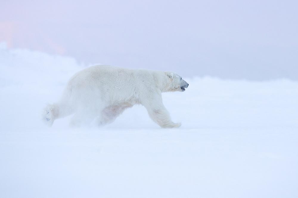 Prizraki-Arktiki_4