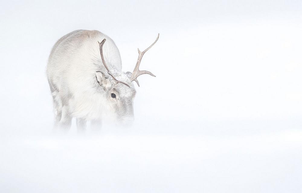 Prizraki-Arktiki_7 (1)