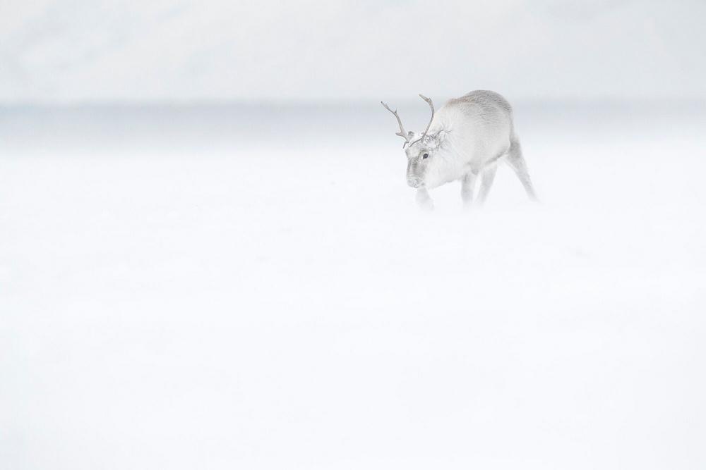 Prizraki-Arktiki_8