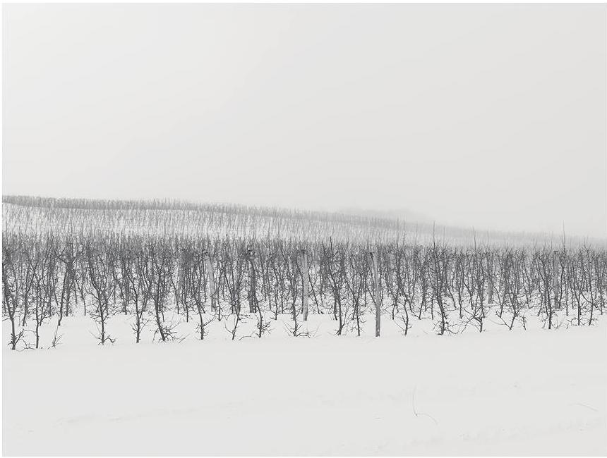 fotograf-Dzhozef-Hoflener_17