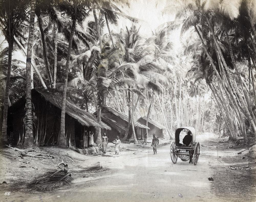 istoricheskie-fotografii-Shri-Lanki_6