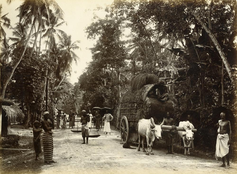istoricheskie-fotografii-Shri-Lanki_7
