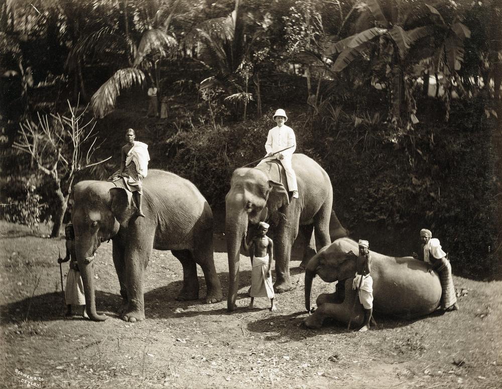 istoricheskie-fotografii-Shri-Lanki_8
