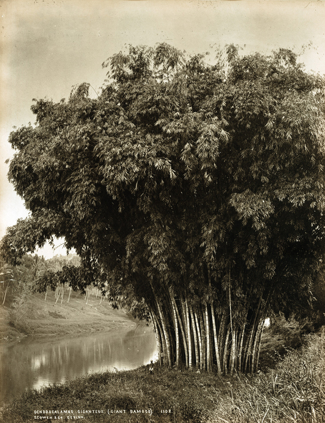 istoricheskie-fotografii-Shri-Lanki_9
