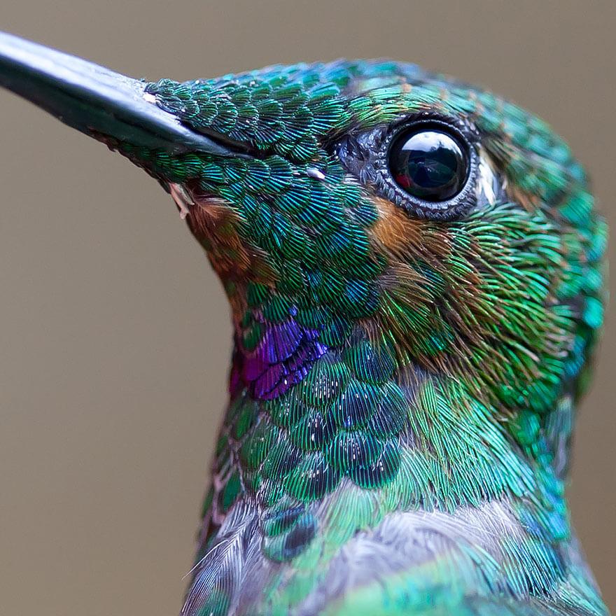 kolibri-26-1
