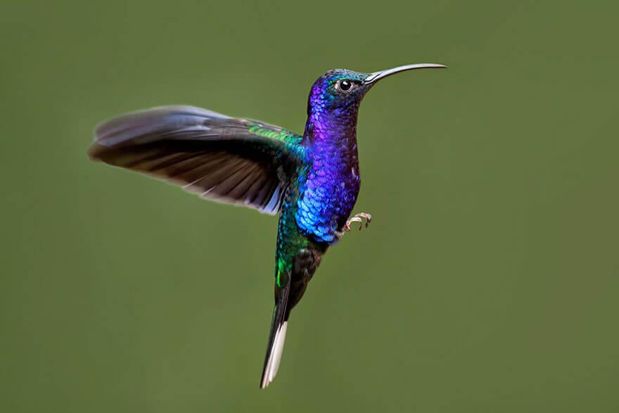 kolibri-26-11