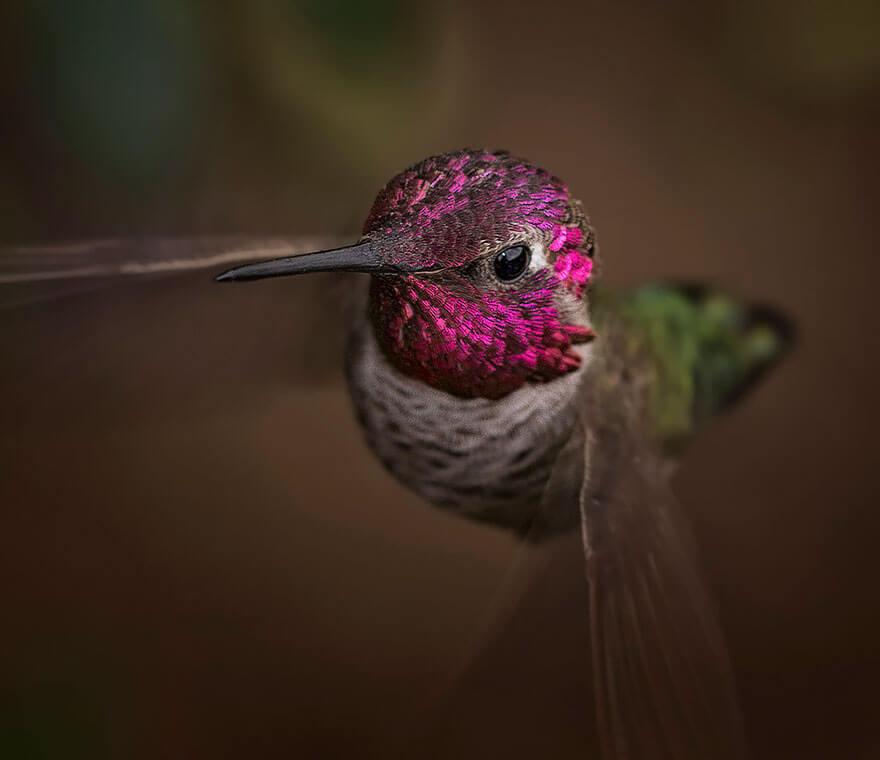 kolibri-26-12